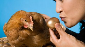 Con gà đẻ trứng vàng của FPT sắp lên sàn Upcom với mã chứng khoán FOX