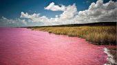 Úc: Giải mã bí ẩn hồ nước màu hồng độc nhất thế giới