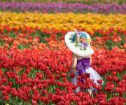 Úc: Lễ hội hoa Tullip lớn nhất Melbourne năm 2017 có gì?