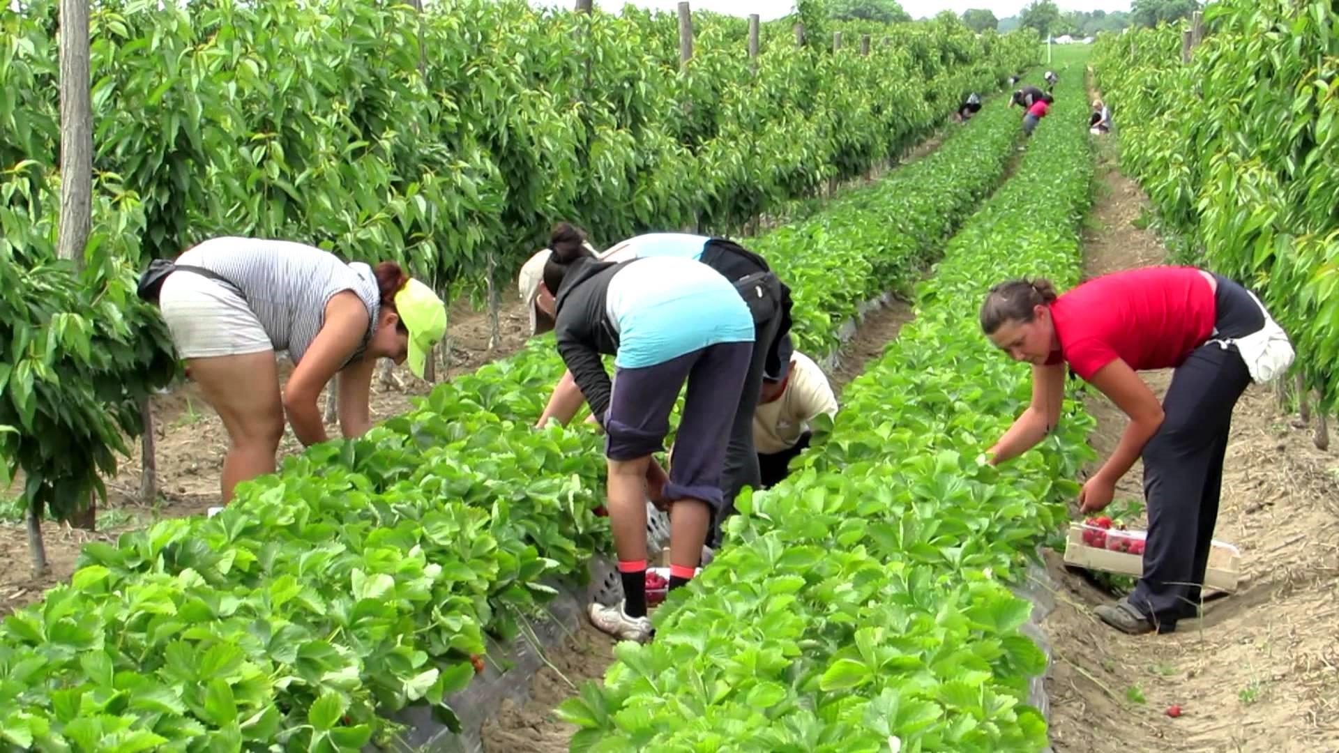 Tình trạng trả lương gian lận cho lao động là người nhập cư, du học sinh gốc châu Á