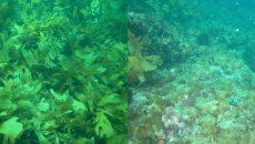 Thời tiết khắc nghiệt do biến đổi khí hậu đã phá hủy 45% môi trường sống ven biển của Úc