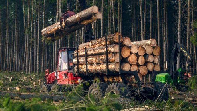 Công nhân ngành gỗ mất việc hàng loạt khi Trung Quốc mở rộng lệnh cấm đối với lâm sản Úc