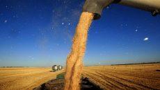 Úc tìm thị trường thay thế trước sức ép gia tăng từ Trung Quốc