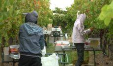 Úc thành lập ủy ban chuyên trách bảo vệ người lao động nhập cư