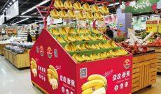 Chuối của HAGL chính thức vào Trung Quốc, xuất hiện trên kệ các siêu thị ở Bắc Kinh, Thượng Hải, Thành Đô…