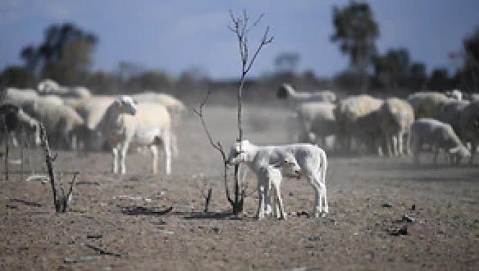 Úc vừa trải qua mùa xuân khô hạn nhất trong lịch sử