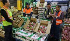 Thanh long tươi Việt Nam bắt đầu được bán ở Úc