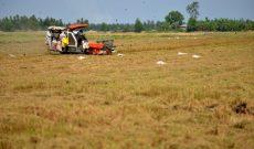 Doanh nhân hóa nông dân đồng bằng sông Cửu Long