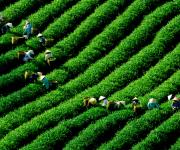 Nông sản Việt đã đến lúc cất cánh?
