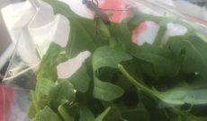 Úc: Rùng mình phát hiện ong bắp cày bay quanh trong túi salad Coles 3 AUD