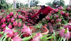 Australia muốn hợp tác kinh tế với nhiều vùng miền ở Việt Nam