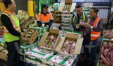 Thanh long Việt Nam ngày càng được ưa chuộng tại Australia