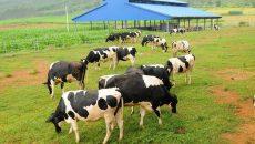 Người Việt sang Úc mua trang trại, chưa chắc hốt bạc